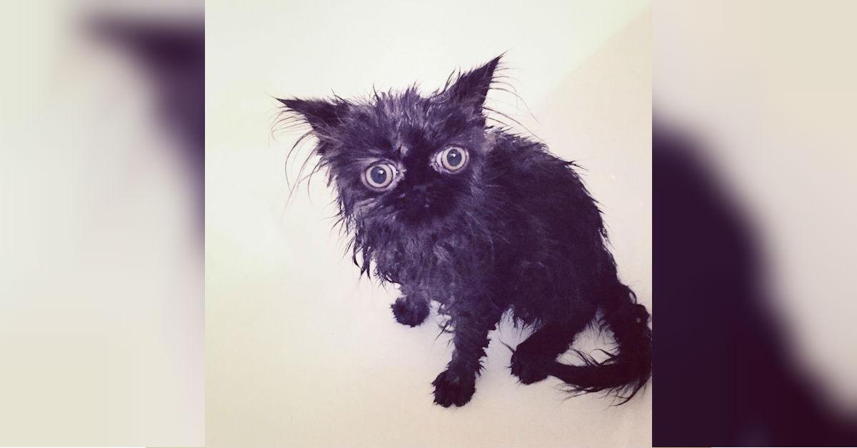 16 фото котов, которые к банному дню не были готовы! Дайте им минутку чтобы обсохнуть