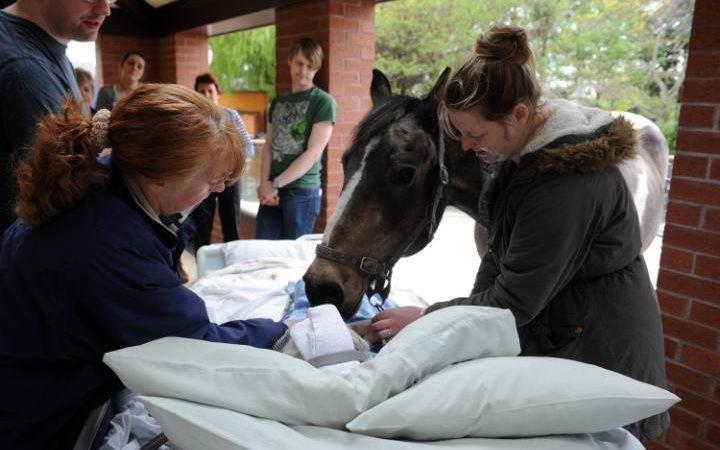 Лошадь посетила свою умирающую хозяйку в хосписе