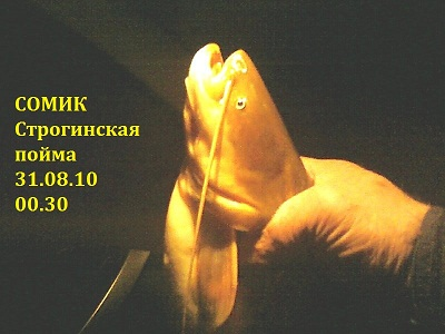 №733. Москва - город рыбный. Строгинская пойма.