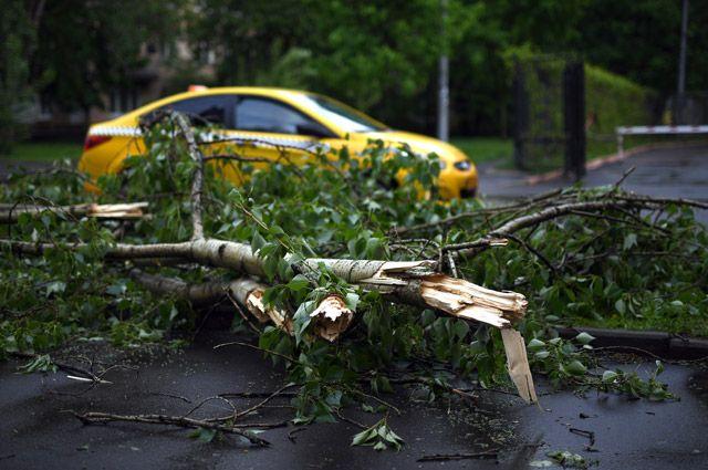 Ураганы и смерчи в Москве и области. Справка