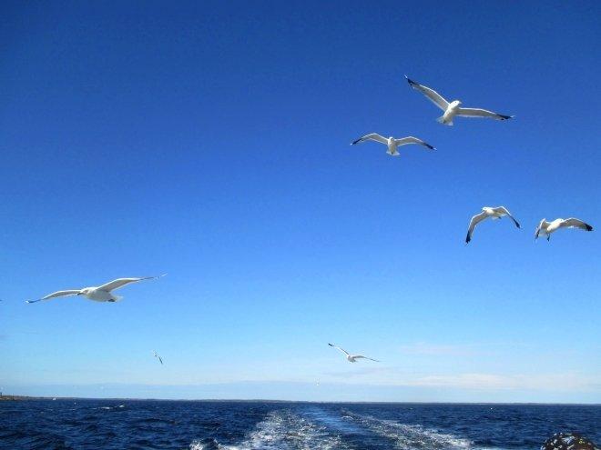 На побережье Белого моря найдены останки одного из самых древних животных на Земле