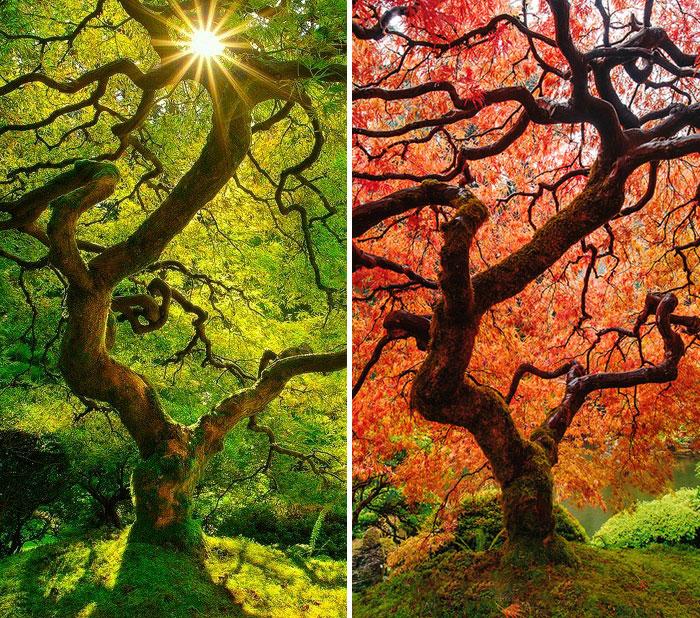 Осеннее преображение<span>12 пейзажей летом и осенью. Увядающая природа торжествует!</span>