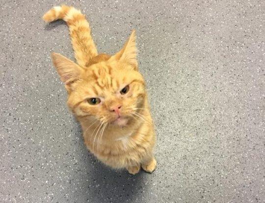 Кот Сол попал в аварию и стал самым суровым в интернете авария, животные, кот, милота, морда, эмоция