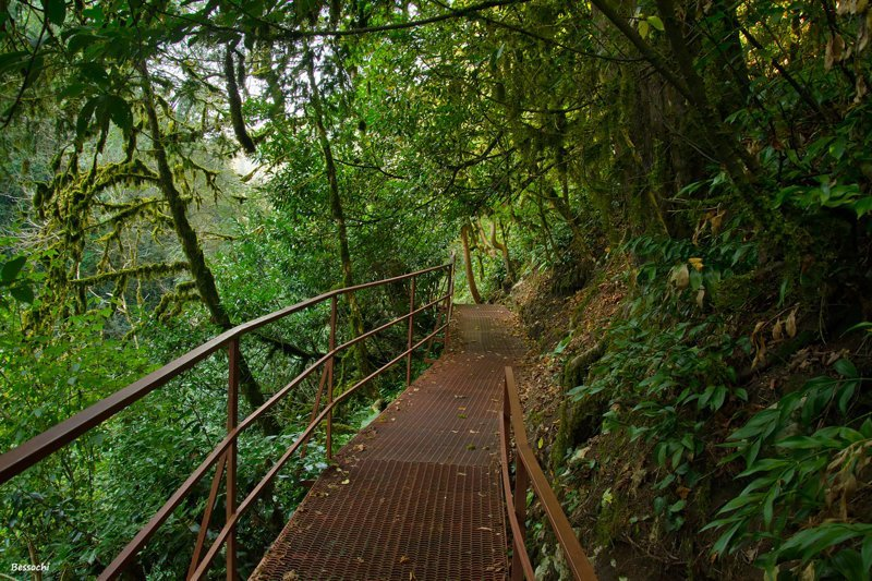 Прогулка Чертовы ворота - Самшитовая роща - Хоста путешествия, факты, фото