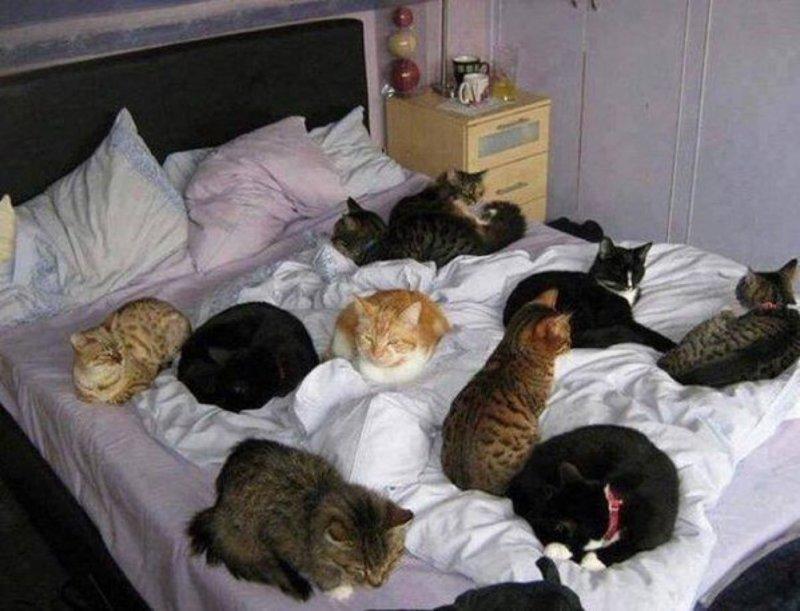 Муж взял в заложники 8 котов жены