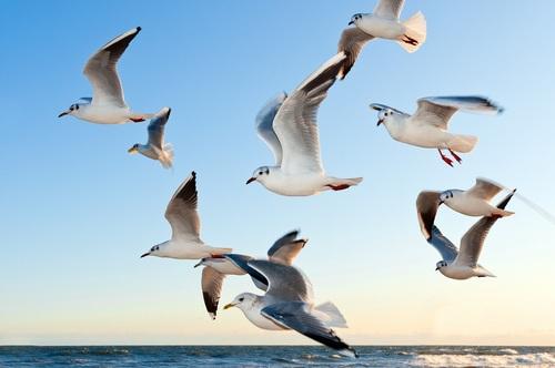 112 видов птиц насчитали в Байкало-Ленском заповеднике за лето