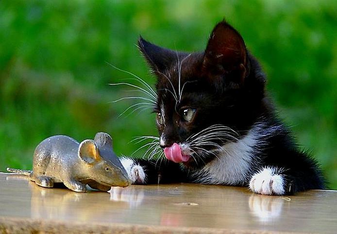 Смешные картинки кота и мыши, подписать открытку днем