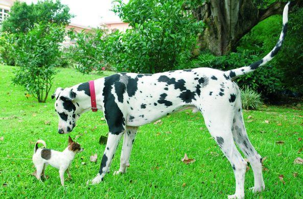 Ученые выяснили, какие собаки умнее