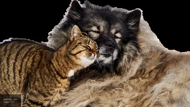 """На Вологодской выставке """"Велеса"""" желающие смогут осчастливить бездомных животных, подарив им кров"""