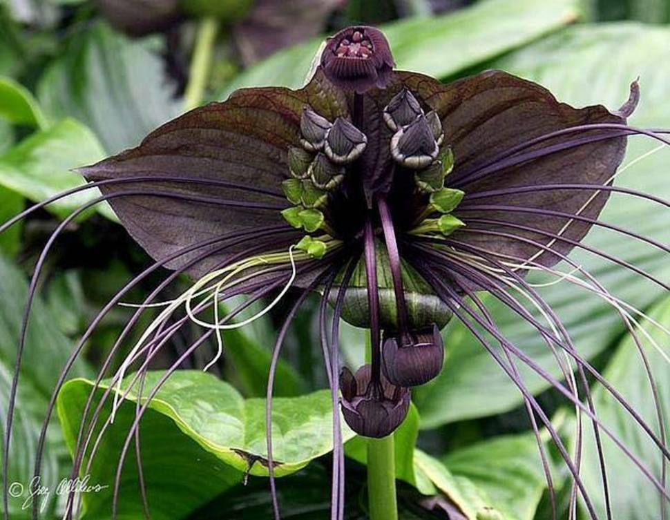 картинка удивительного цветка спины видно