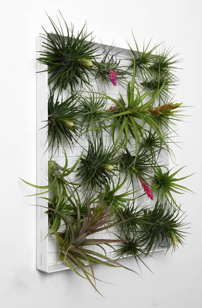 Живая стена из растений в рамке
