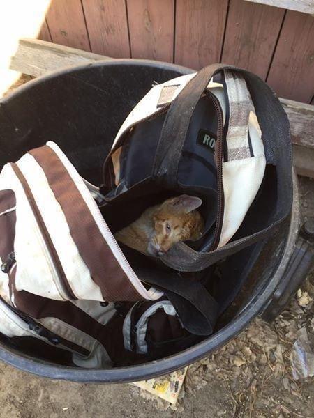 Она увидела рюкзак на помойке, внезапно он пошевелился…