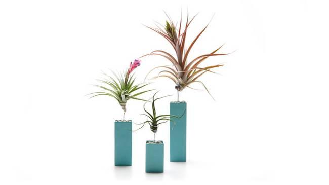 Живая стена из растений: синие вазы