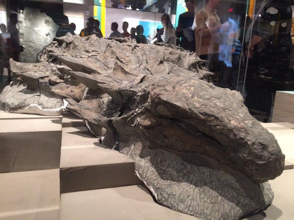 «Мумия динозавра»