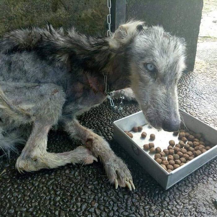 Брошенная собака была похожа на высохший скелет — 10 месяцев спустя её просто не узнать!