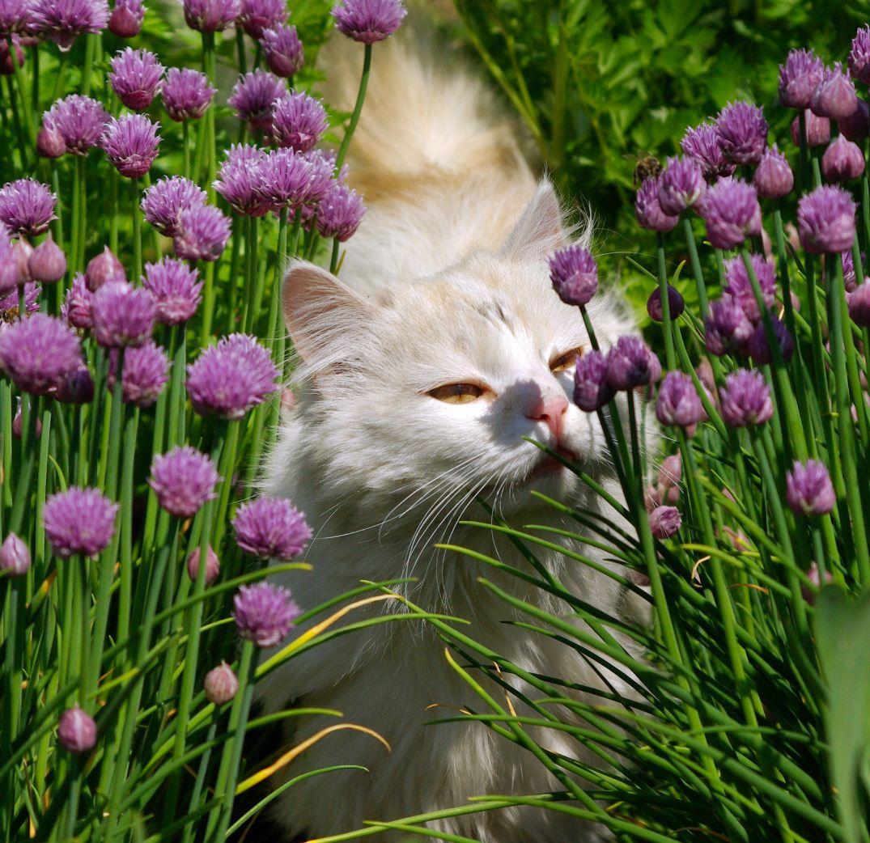 кот нюхает картинки вам требуются