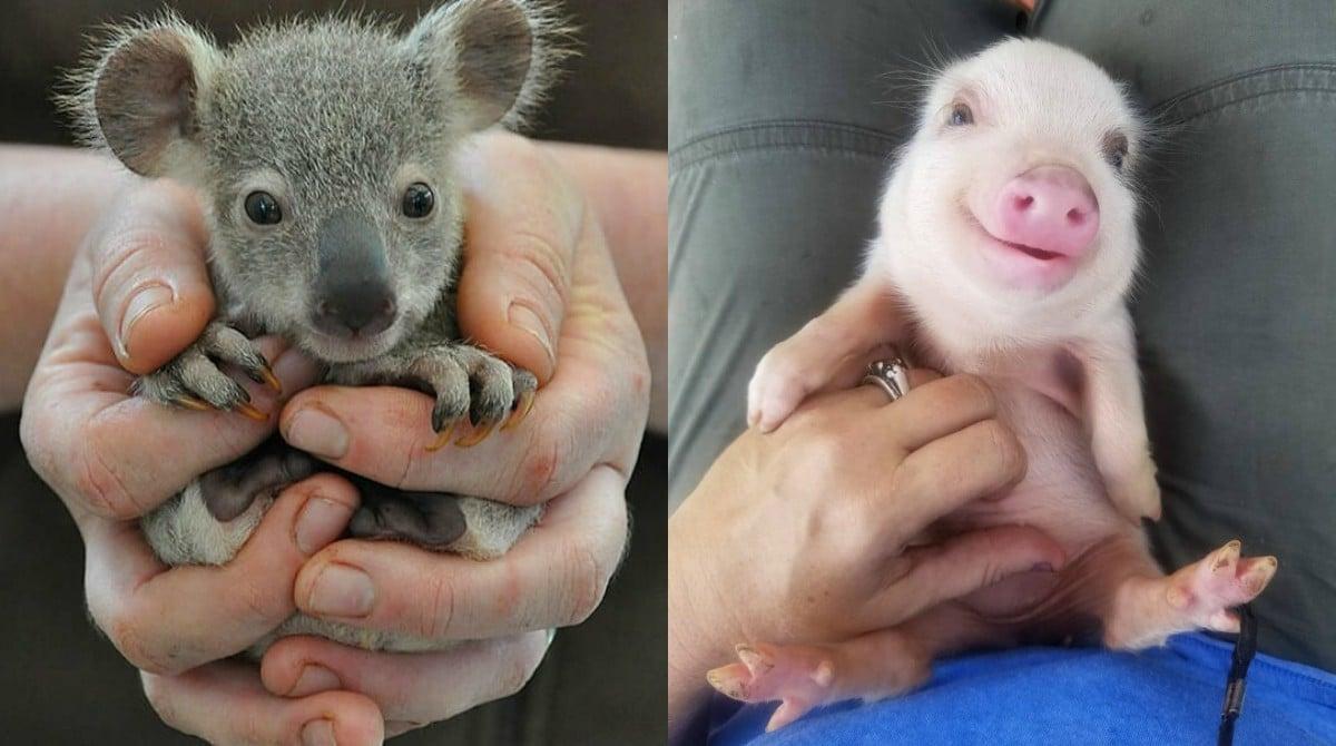 15 фото малышей животных, при виде которых ты будешь улыбаться даже в хмурый день! детеныши