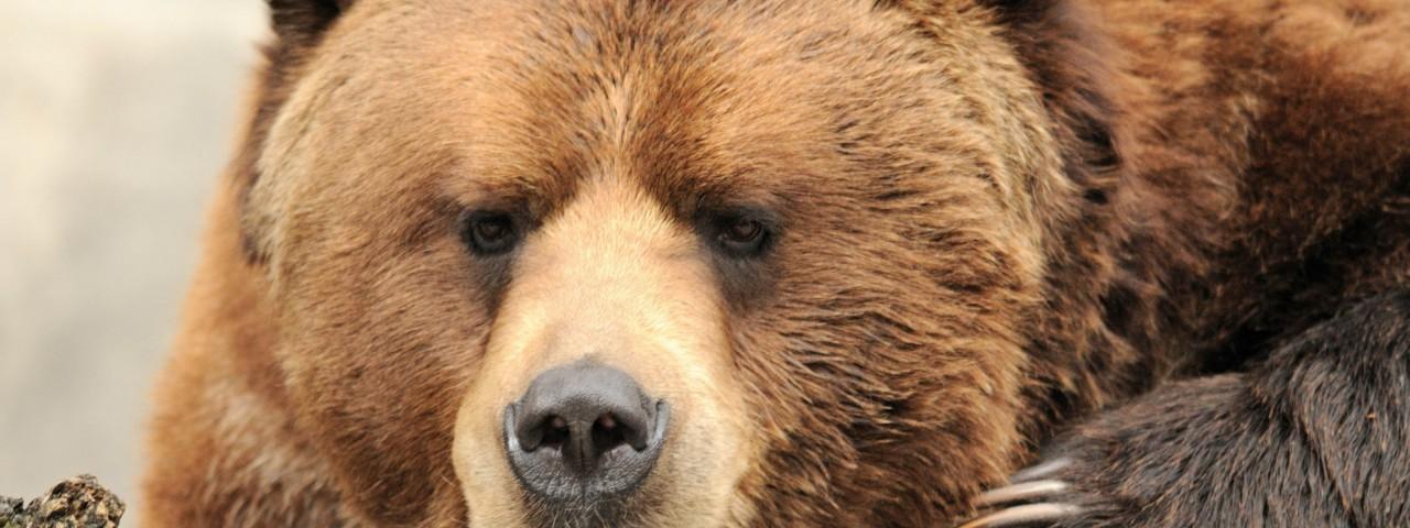 Медведи: Медведь-отморозок, немного об осознании и гордости