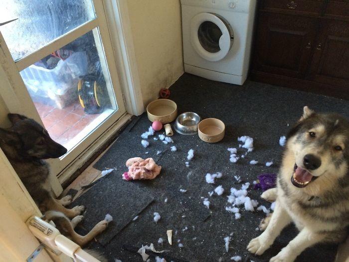 Кто-то убил игрушку... дом, животные, проступок, шалость