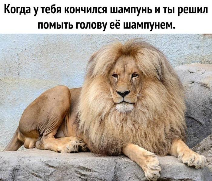 https://mtdata.ru/u19/photoC2B1/20273975754-0/original.jpeg#20273975754
