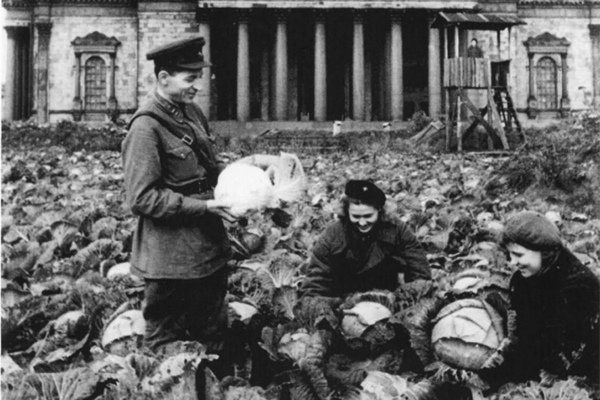 Урожай на газонах: как блокадный Ленинград спасал свою жизнь блокада, история, ленинград