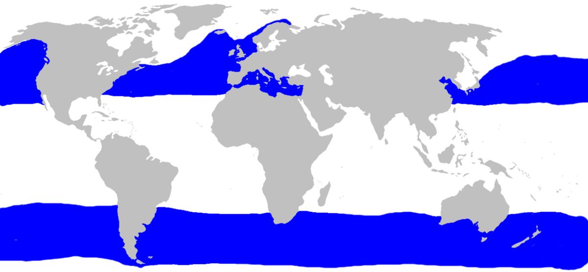 Распространение гигантской акулы (CC BY-SA commons.wikimedia.org)