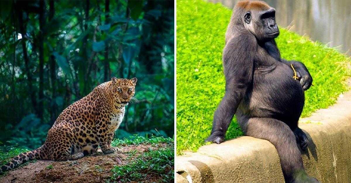 10 фото будущих мам из мира животных