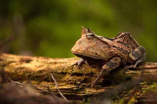 frog-photography-31__880