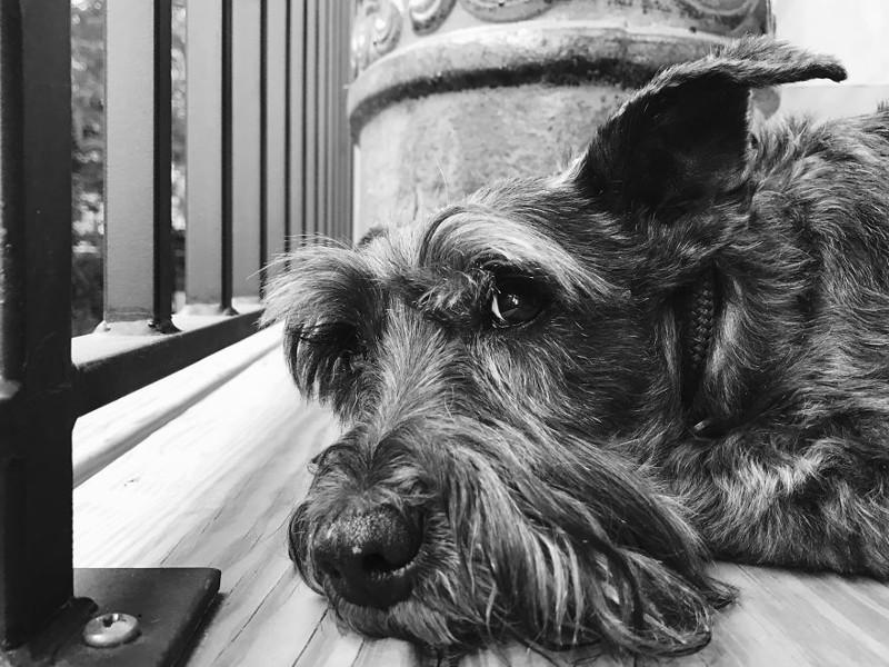 Гас (14 лет) собаки, фото собак, фотографии животных