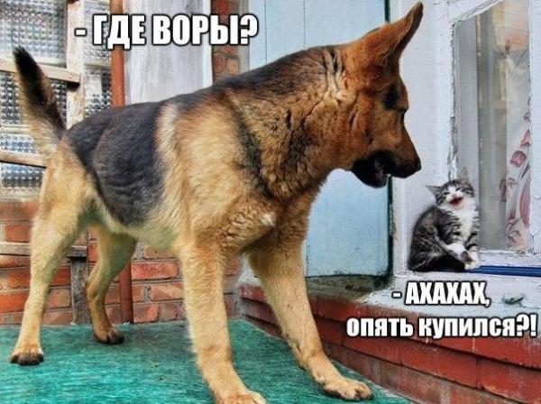 Прикольные фото собак с надписью, сделать открытку своими