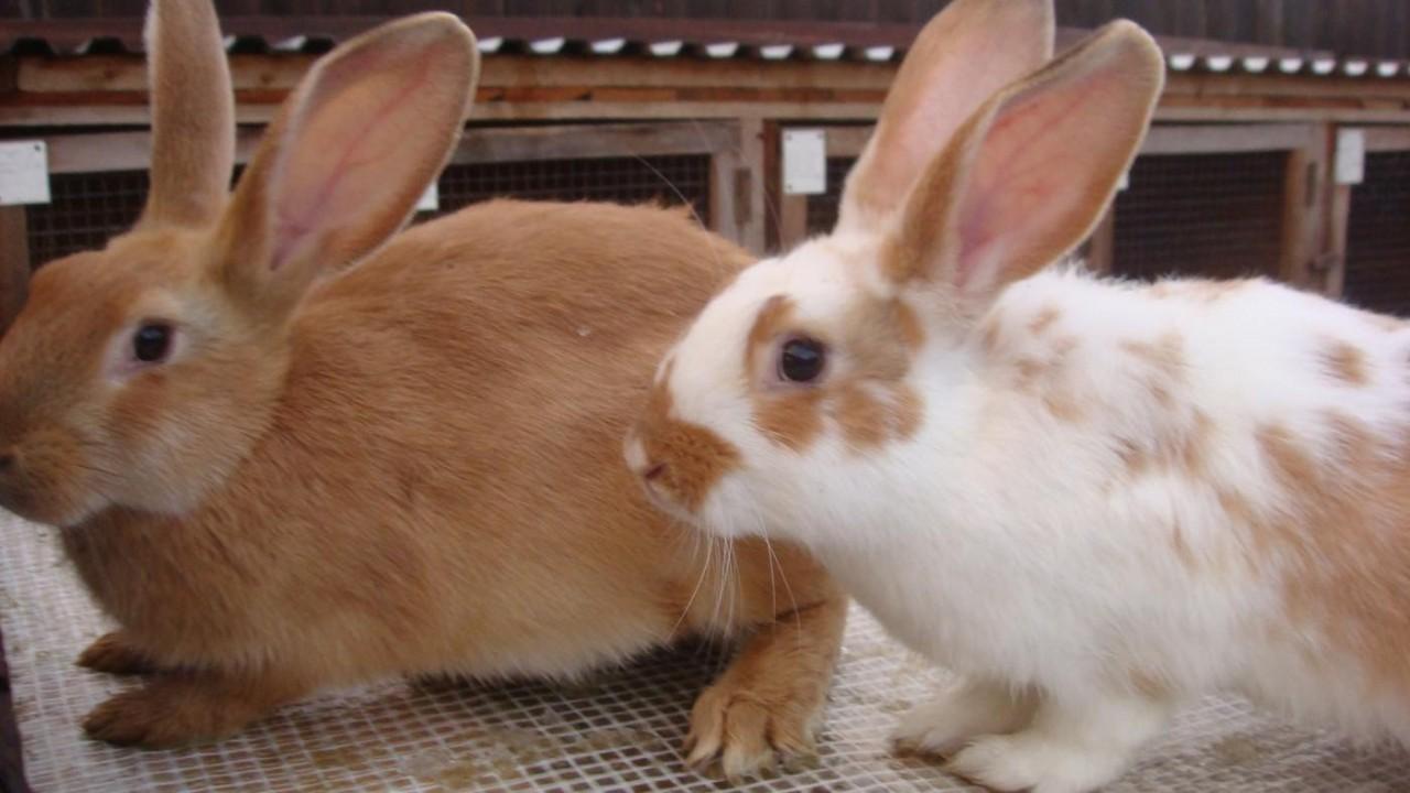 Картинки по запросу кролики на дачном участке
