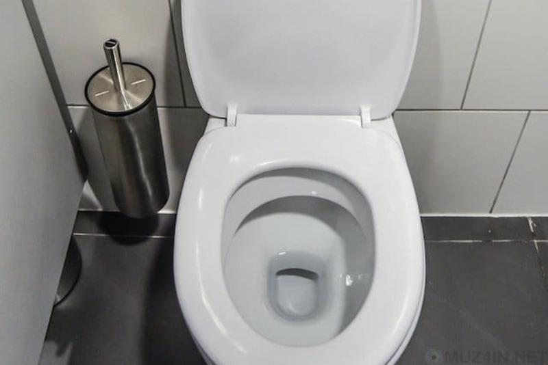 Страшная правда о туалетах гигиена,жизнь,интересное,туалеты