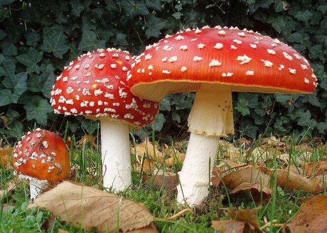 10 самых опасных растений и грибов Земли биология,здоровье,наука,растения