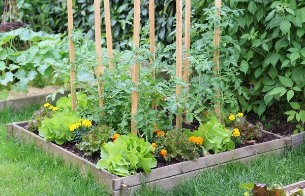 Солнечные оттенки в огороде: растения в желтой и оранжевой гамме
