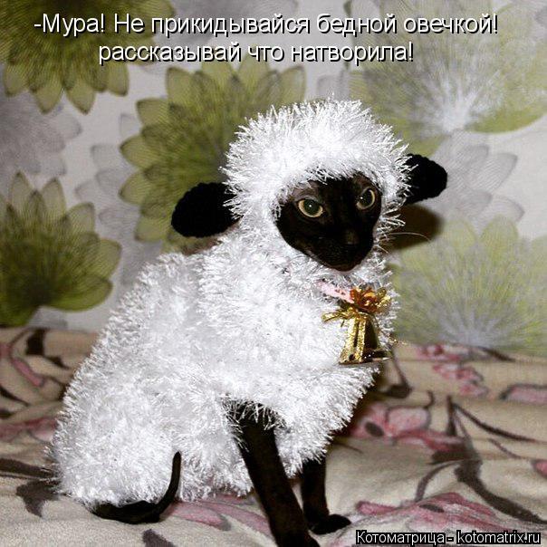Новогодняя котоматрица! Улыбаемся)))