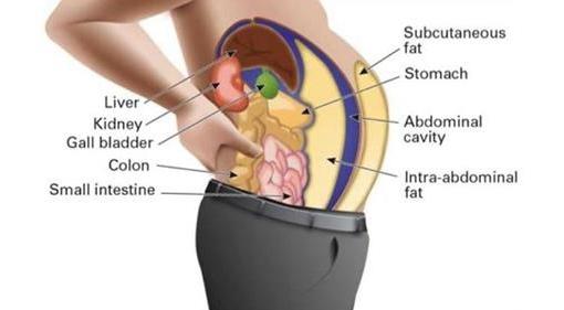 Токсины в жировых клетках вы…