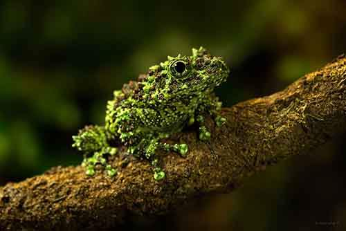 frog-photography-6__880