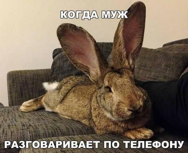 https://mtdata.ru/u19/photoDF6D/20134361171-0/original.jpeg#20134361171