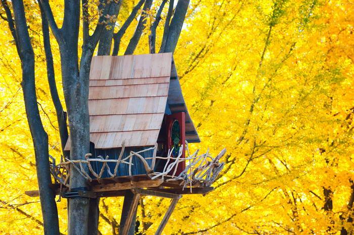 3. Дом на дереве в окружении красивых желтых деревьев. Этот домик расположен в столице Японии – Токио. Дом имеет забор, сделанный из кривых веток, что придает ему схожесть с большим птичьим гнездом.