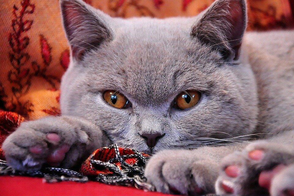 Доступная кошка