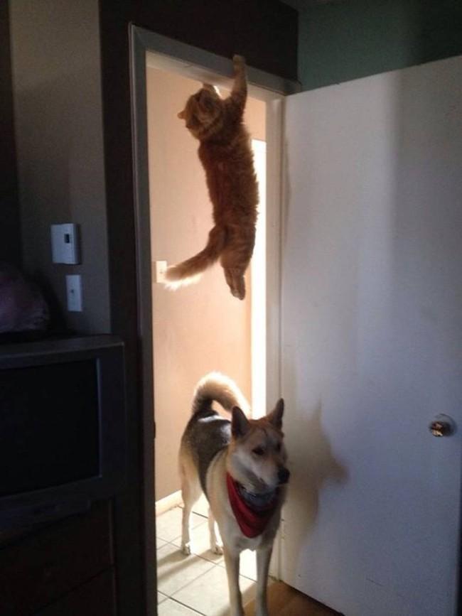 Список правил от настоящего кота