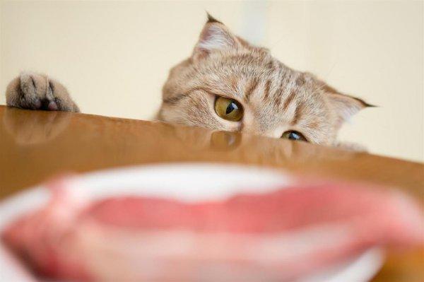 20 котов, которые пытались что-то украсть