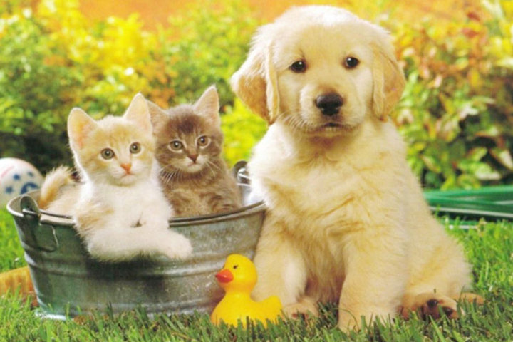 Налог на домашних животных в…