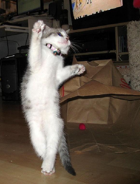 Пасху открытка, смешная картинка котенок на танцах