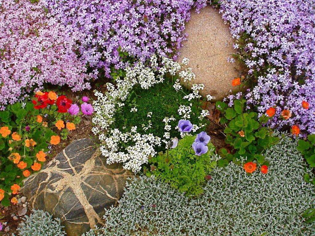 Почвопокровники - неприхотливая роскошь сада