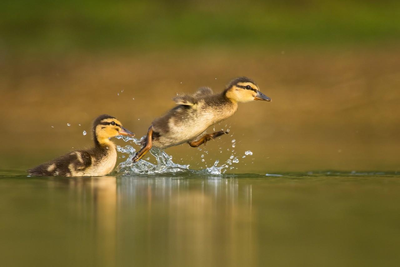 Птицы в смешных картинках, утро хорошего