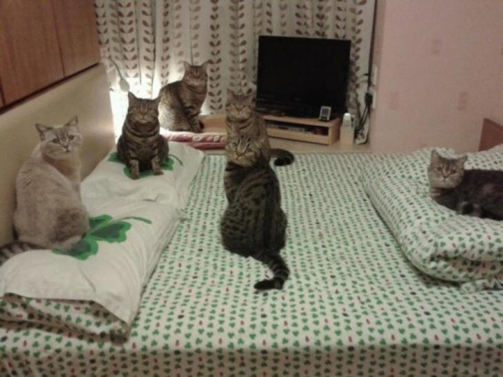 """""""У нас здесь собрание. Закрой дверь!"""" животные, смех, снимок"""