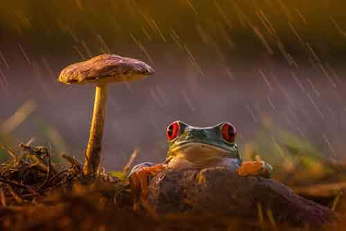 frog-photography-19__880