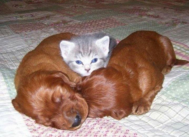"""""""Да выбросьте вы этих щенят, и котёнка в придачу тоже заберите"""""""