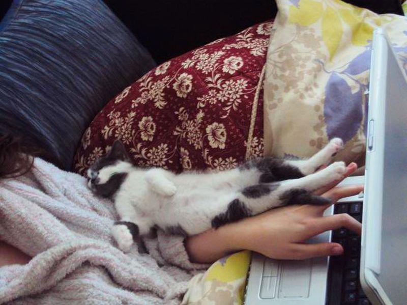 Коты, которые делают все, что бы отвлечь хозяина от работы